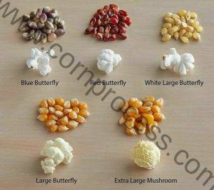 Different Type Popcorn Introduction