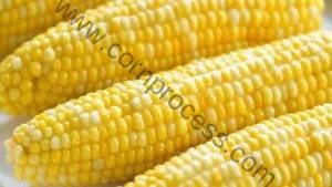 What is Difference Between Corn and Maize