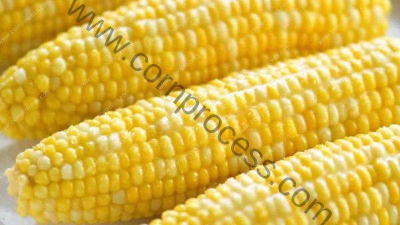 What-is-Difference-Between-Corn-and-Maize